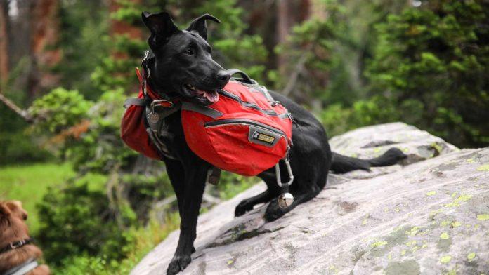 Top-Four-Best-Backpacking-&-Dog-Hiking-Gears-on-toplineblog