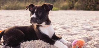 9-Habits-to-Change-in-Your-Dog's-Behavior-on-toplineblog